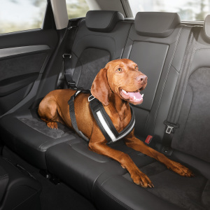 Safety harness for dogs, small